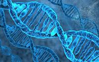 女性肿瘤五项基因检测